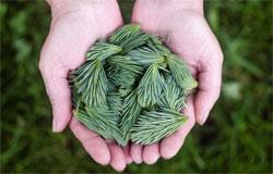 tratamiento plagas plantas