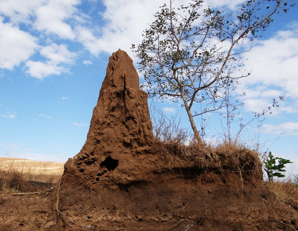 Las termitas - los termiteros