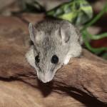 Ratones en casa, qué hacer