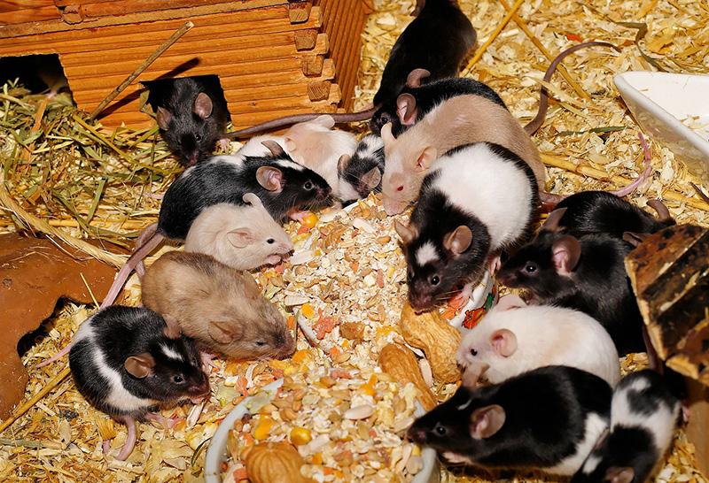 Invierno y ratas - ID Control de Plagas
