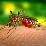Picaduras de mosquitos y deportistas