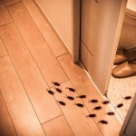 Por qué aparecen cucarachas en casa