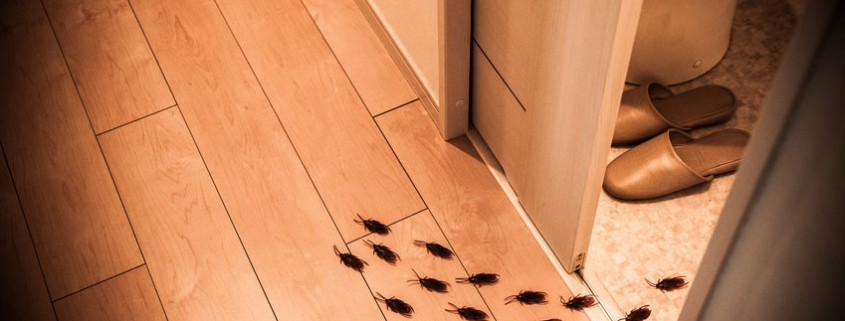 Por qué aparecen cucarachas en casa - Blog I+D Control de Plagas
