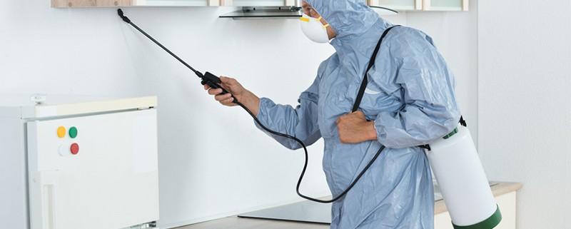 Control integrado de plagas - Blog ID Control de Plagas