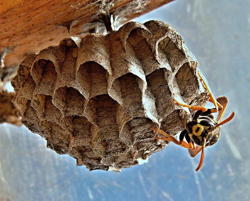 Los insectos - Blog de I+D Control de Plagas - Colmena