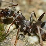 Insectos, algunas curiosidades