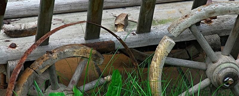 Termitas y carcoma diferencias - I+D Control de Plagas - Efectos de las plagas de la madera