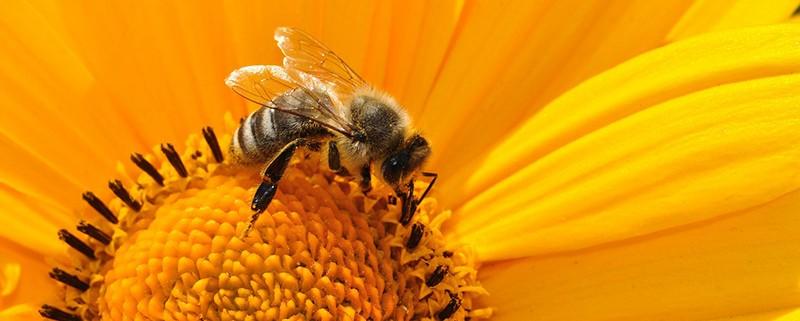 abejas en peligro - Blog I+D Control de Plagas