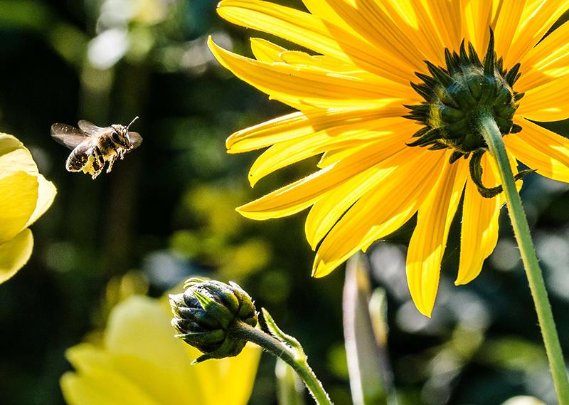 abejas en peligro - Blog de I+D Control de Plagas