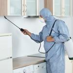 Plagas en casa, consejos para evitarlas