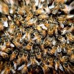 Ataques de abejas a ciclistas