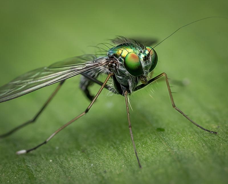 Vida Silvestre - Blog de I+D Control de Plagas