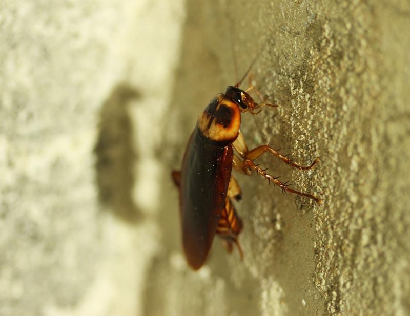 Conocer a tu enemigo - Blog de ID Control de Plagas