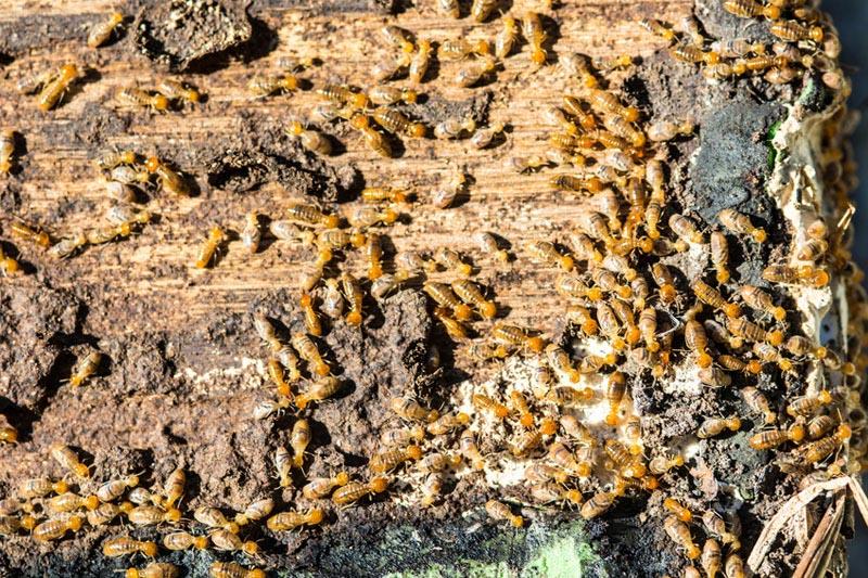 Casa con termitas - ID Control de Plagas
