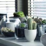 Combate las plagas en casa