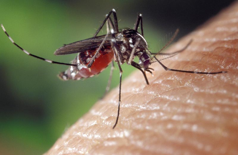 Plagas más frecuentes - ID Control de Plagas