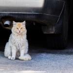 Gatos en la calle, ¿otra plaga?