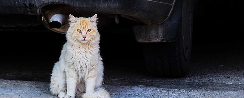 Gatos callejeros - ID Control de Plagas