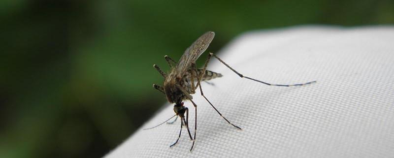 Picaduras de insectos - ID Control de Plagas