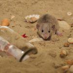 Enfermedades transmitidas por los roedores