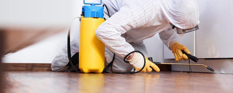 contratar servicios contra plagas