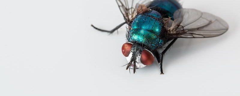 Insectos voladores en industrias alimenticias - ID Control de Plagas