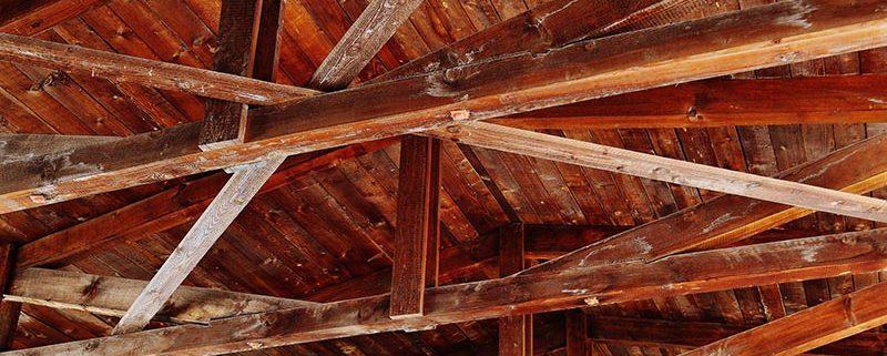 Las termitas - ID Control de Plagas Urbanas