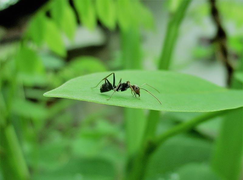 Plaga de hormigas en casa - Control de Plagas - I+D Control