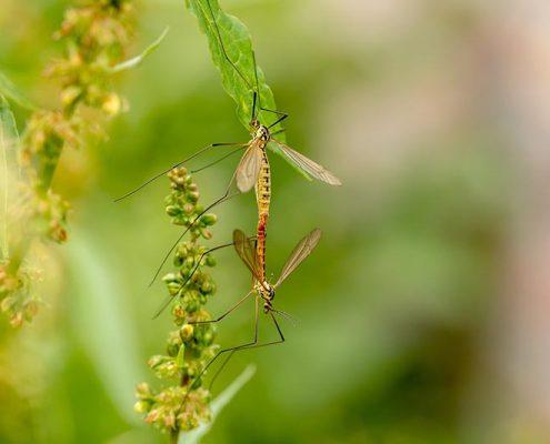 Mosquitos en verano - ID Control de Plagas
