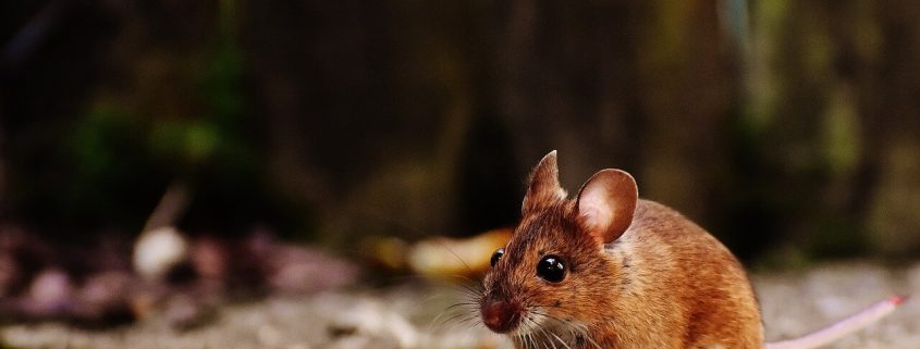 Eliminar roedores