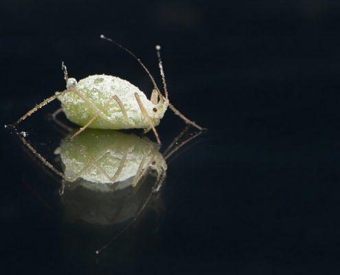 ¿Qué debemos hacer si tenemos un problema de plagas?