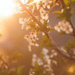 ¿Qué plagas nos encontramos cuando llega la primavera?