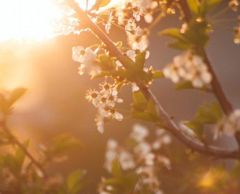 plagas que aparecen en primavera