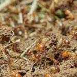 ¿Cómo podemos saber si hay termitas en los muebles?