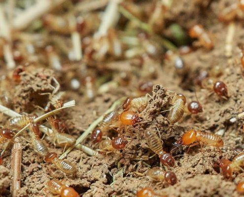 termitas en los muebles